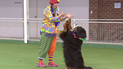 Sue Murray and her Bernese Kia took on a circus theme for their performance. Picture: 9NEWS