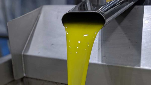 Fresh olive oil at Boundary Bend