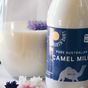 Is camel milk the next big thing?