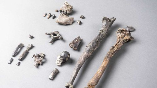 These bones suggest early human ancestors were walking upright much earlier than previously thought.