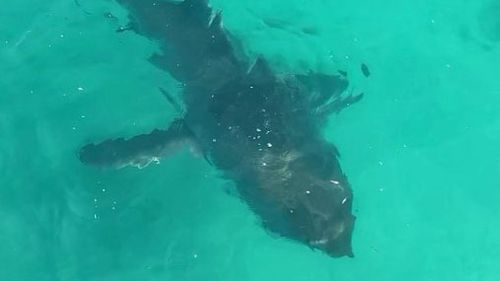 The shark lingered around the jetty for about five minutes.