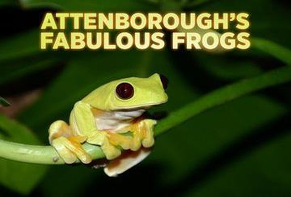 David Attenborough's Fabulous Frogs