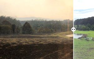 Crowe's multimillion-dollar estate regenerating after bushfires 'smashed' it