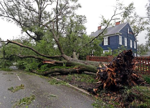 A tree uprooted by strong winds lies across a street in Wilmington, North Carolina.