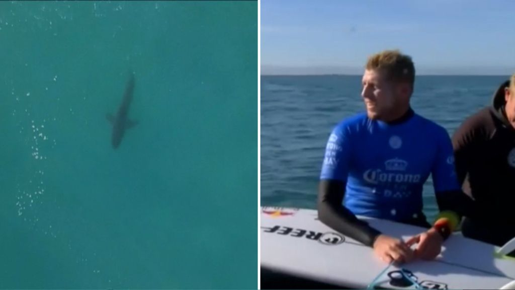 Mick Fanning caught up in fresh shark scare