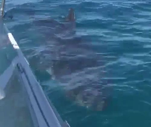 The shark spent 20 minutes circling the boat. (Supplied)