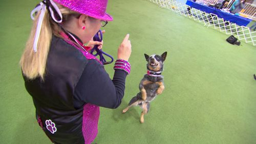 Deb Harvey and her Australian cattledog Tia took home the Top Dog prize at Dances with Dogs in Victoria. Picture: 9NEWS