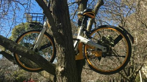 Several oBikes have ended up in trees or tossed in the Yarra River. (9NEWS)