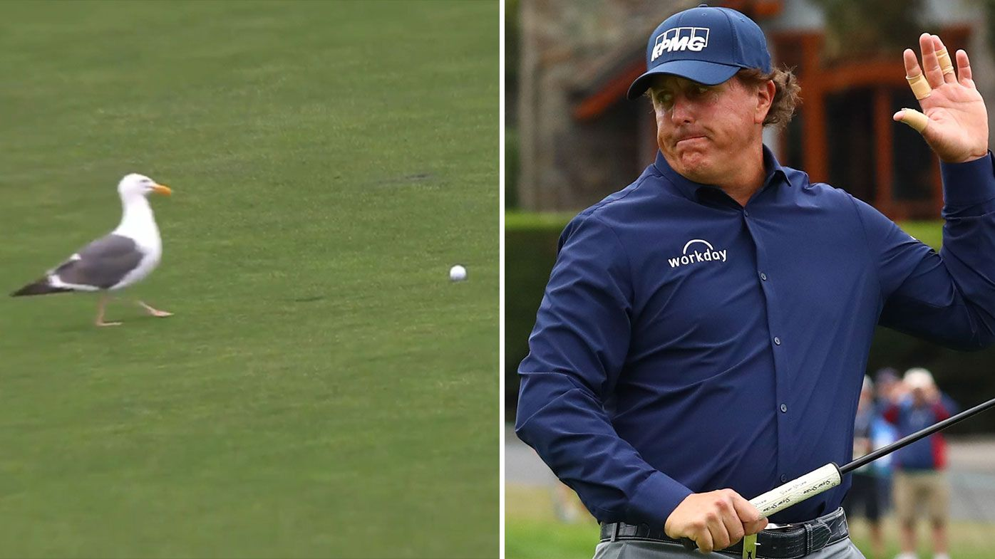 Phil Mickelson hits US Open birdie after seagull threatens to steal ball in second round