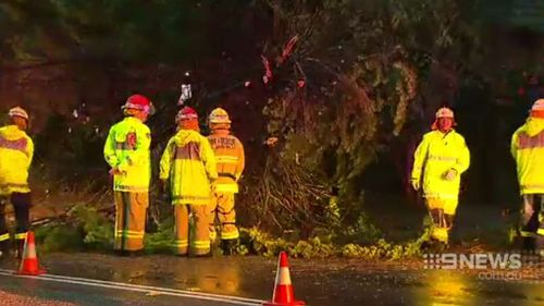 A tree was brought down in Lane Cove. (9NEWS)