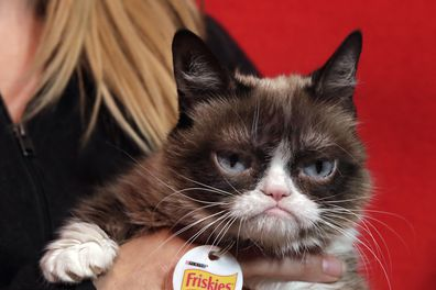 Grumpy Cat was seven when she passed away from complications from a urinary tract infection.