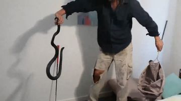 Kane Durrant was called when a 1.2 metre red-bellied black snake was found in a woman's bedroom.