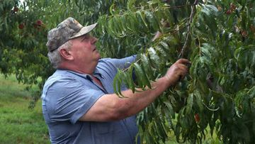 Peach grower Bill Bader has won his lawsuit against Bayer over damage to his orchard from herbicide used on neighbouring farms.