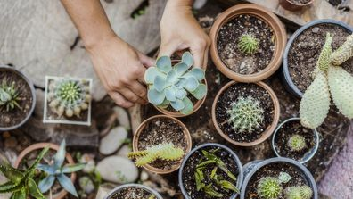 The 3 big mistakes people make with succulents