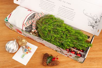 How you can get a tiny living Christmas tree delivered to your door