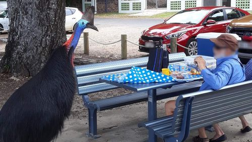 'World's most dangerous bird' crashes Queensland couple's picnic lunch