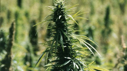 Marijuana to be legalised on Native American reservations
