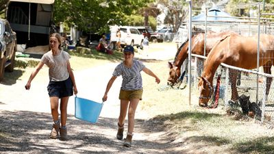 Horses safe