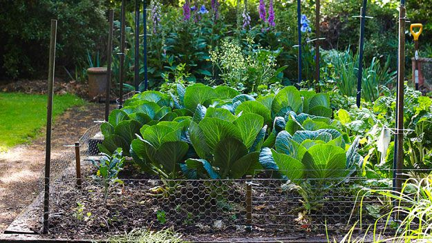 The greener good: how to plan a backyard garden
