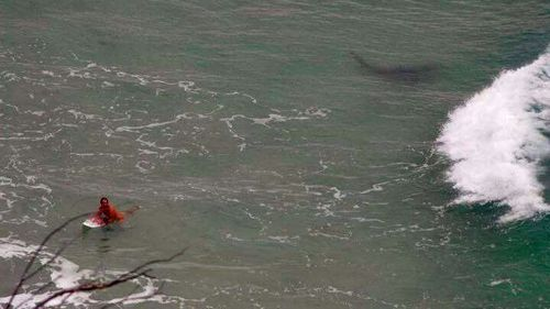 Shark snapped stalking surfer off Queensland coast