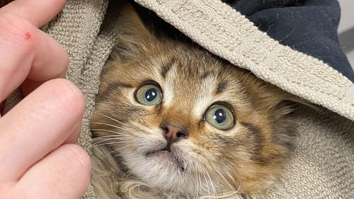 Kitten rescued after paws get frozen stuck to semi-trailer