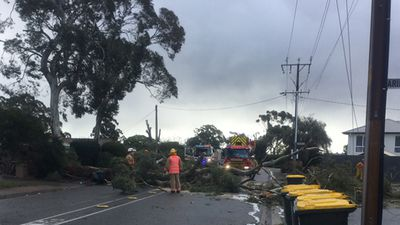 A downed tree in Aberfoyle Park, Adelaide yesterday. (Hamish James)