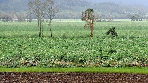 Cyclone Debbie causes $150m damage to sugar crops