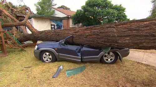 A car is crushed by a tree in Sydney.
