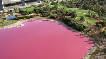 Why Melbourne lake has turned pink