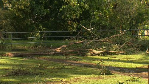 Trees were uprooted and homes damaged. (9NEWS)