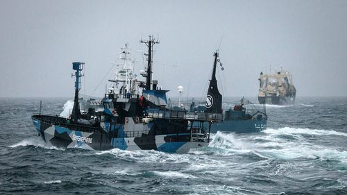 A Japanese whaling vessel cutting in front of the Bob Barker. The incident occurred as the Japanese whaling fleets' three vessels attempted to deter the Sea Shepherd ships from their current position in the Southern Ocean. (Image: AAP/Sea Shepherd)