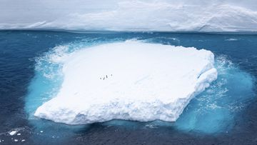 A fragment which had broken off from one of the largest recorded icebergs, called the A68a, floating near the island of South Georgia in the South Atlantic in December 2020.