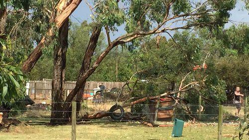 Trees were brought down in Tynong, in the state's east. (Karen Damen)