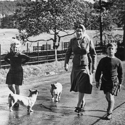 1957: The royal family walking their corgis on the Balmoral Castle estate.