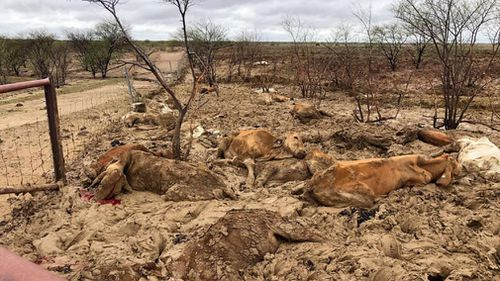 In many towns, cattle were cut off from food by rising flood waters and died by being stuck in the mud.