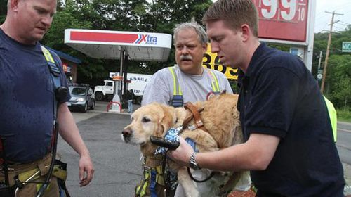 Guide dog jumps in front of bus to save blind owner