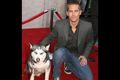 In the same year he starred in the Walt Disney Pictures movie <i>Eight Below</i> which opened in first place at the box office, grossing more than US$20 million in its first weekend.