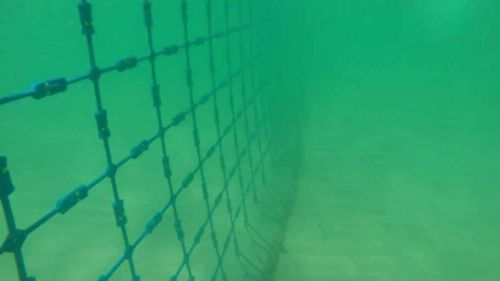 Some Ballina beaches will have eco-shark barriers installed. (9NEWS)
