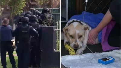 Dog shot during Sydney police operation