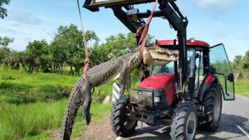 Four-metre long 'problem crocodile' killed in NT after lunging at humans