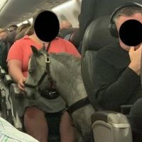 Tiny horse causes major stir on boarding US flight