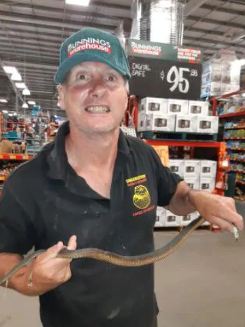 Snake catcher Raymond Hoser was called out to Pakenham Bunnings last night when a deadly Copperhead crawled out from under a pallet.