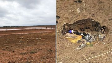 The recent rains have brought out some rare sights on NSW regional drought-stricken properties.