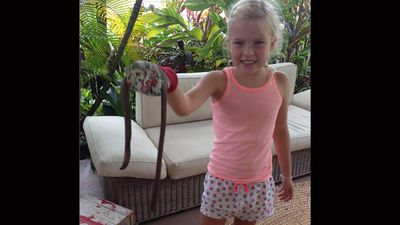 """The Buderim family has seen a few little snakes around their property in tropical Queensland but the mother-of-two said these monsters looked much bigger and """"as thick as a Bunnings sausage"""".<p _tmplitem=""""2""""></p><p _tmplitem=""""2""""> Mrs Simoneau said that as soon as her seven-year-old daughter Scarlett saw the giant earthworm """"She wanted to pick it up right away but I made her put on the gardening gloves."""" </p><p _tmplitem=""""2""""> While mum was """"pretty shocked"""" by the 1m earthworm, Scarlett was """"fascinated by it,"""" Mrs Simoneau said, and held it up as the long worm writhed around in the air. </p><p _tmplitem=""""2""""> """"(But) I kept the toddler away because she would have been more fascinated."""" </p><p _tmplitem=""""2""""> </p>"""