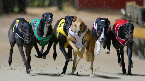 Sydney hosts pro-greyhound racing ban rally