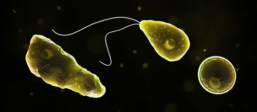 The naegleria fowleri, a brain-eating amoeba, wasfound in a Texas water supply. Supplied: Centers for Disease Control and Prevention.