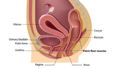 Pelvic floor 101: Why it's the next big thing in fitness