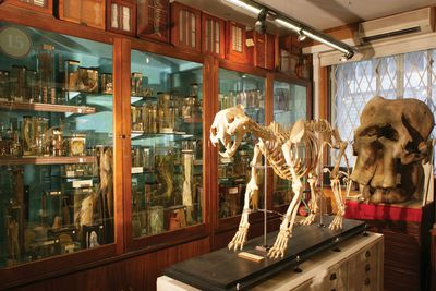 <strong>Grant Museum of Zoology</strong>