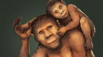 Illustration of a mother Australopithecus africanus and her young offspring.
