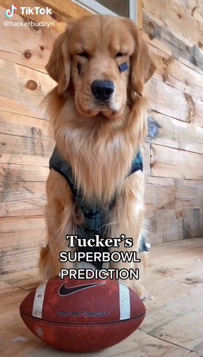 The top-billed dogs of TikTok